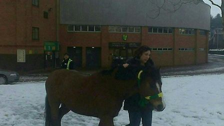 Boo is haltered with a Norwich City scarf after being seen running around near Carrow Road. Picture: