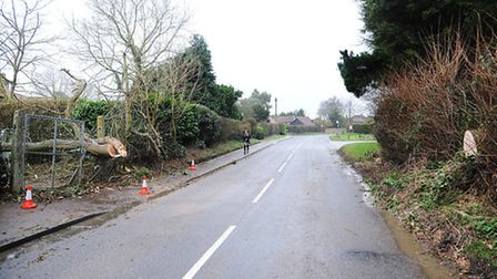 A 30ft tree fell in East Tuddenham today hitting a substation in the area causing a blockage to the