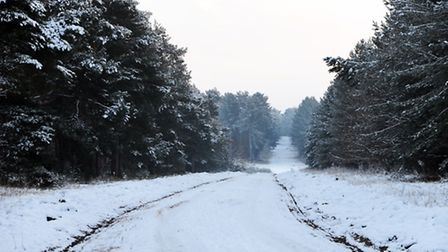 Snow covers trees Thetford Forest. Photograph Simon Parker