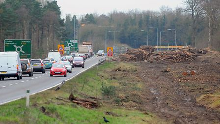 Cleared trees lay beside the A11 at Barton Mills as part of the preperation work for the improvement