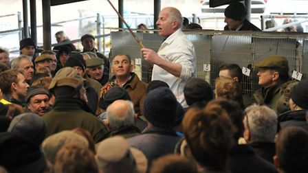 The return of the Fur & Feather auction at Norwich Livestock Market. Auctioneer, David Ball in actio