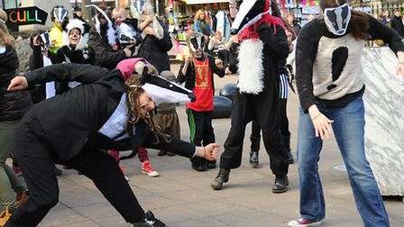 Dancing badgers as the Rights 4 Animals group perform the Harlem Shake at the Haymarket, in a protes