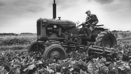 AgricultureGerry Smith works sugar beet fields with a 1941 'land-lease' tractor which has been in ev