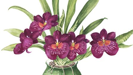 Moth Orchid in pot. By Susan Thompson