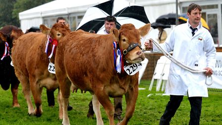 Day one of The Suffolk Show 2013.