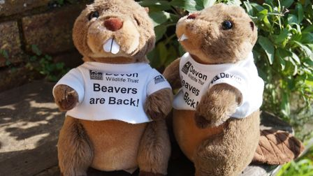 Devon Wildife Trust is giving people the chance to 'adopt a beaver' to raise funds for the River Ott