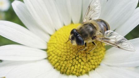 bee-pic1-a