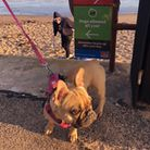 A dog ban is in force on East Devon's beaches from May1 - September 30. Picture: EDDC