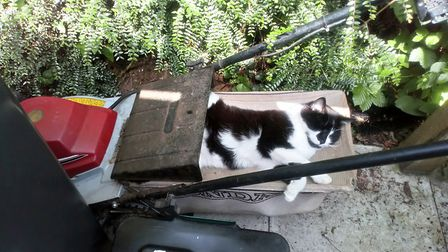 Visiting cat likes to help in the garden. Picture: Alison Cameron