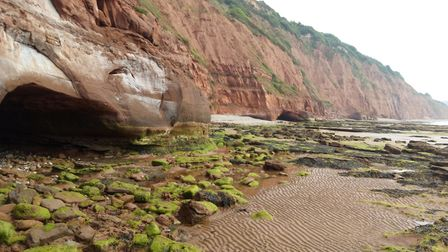 Like the different textures of cliffs, ripple-marked sand and algae/seaweed covering of rocks. (Take