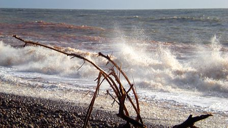 Flotsam lying on Budleigh beach after a Winter storm. Picture: Barbara Mellor