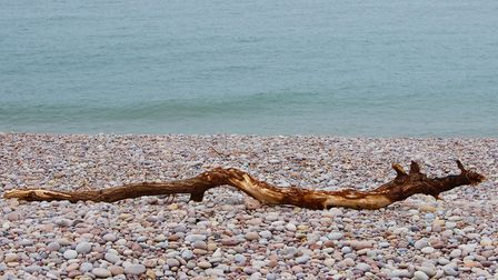 An enjoyable day taking photos in Budleigh Salterton. Picture: Kathy Walsh