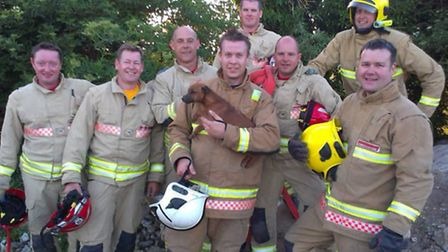Crews rescue puppy from under slabs of concrete at Whittington.