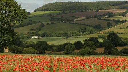 A carpet of poppies at Colaton Raleigh. Ref exv 6215-27-13AW. To order your copy of this photograph