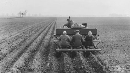 AgricultureEarly sowing of potatoes, a team working near Rackheath, Norwich. With an old potato sack
