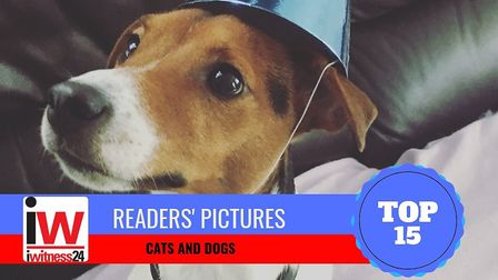 Our top 15 cats and dogs photos by our readers sent in through iwitness24. Picture: Samantha Layzel