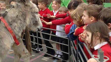 Donkeys from The Sidmouth Donkey Sanctuary visit the pupils at Exeter Road primary School. Picture: