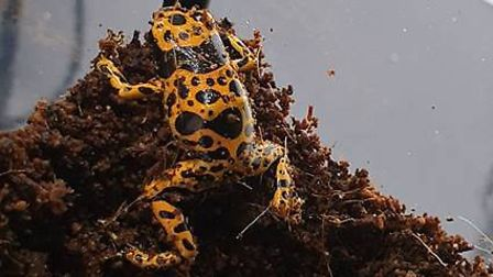 Poison Dart Frog. Picture: We Do Reptiles