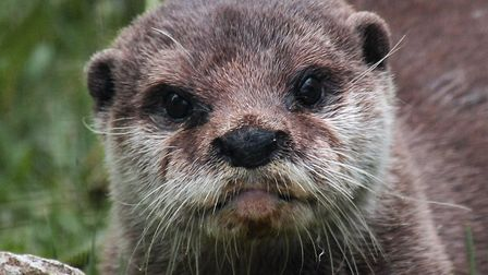 An otter at Axe Valley Wildlife Park. Picture: Axe Valley Wildlife Park