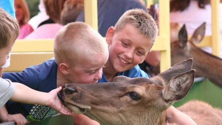 A red deer at World of Country Life. Picture: World of Country Life