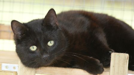 Pierre, a black male, likes to keep an eye on everything the people around him are up to.