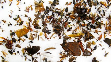 Scientists at the University of East Anglia say an 'insect soup' is a breakthrough in how to measure
