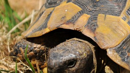 File pic of a tortoise