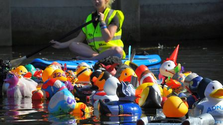 The Grand Norwich Duck race action on the river Wensum, Norwich. Photo: Steve Adams