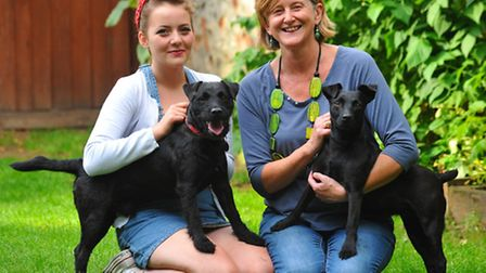 Reunited ' husband and wife ' Patterdale terriers Bear ( red collar ) and Doodle. Bear dramatically