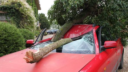The ash tree that fell on a car being driven by two demonstrators on their way to Wolterton Hall tex