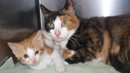 The mother cat and her ginger and boy male kitten