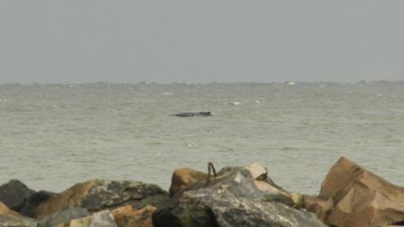Andrew Easton took this picture of the humpback whale from Sea Palling on Tuesday, October 29.