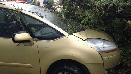Selene Sawyer's car that was crushed by a tree when it fell on her car in Freethorpe.