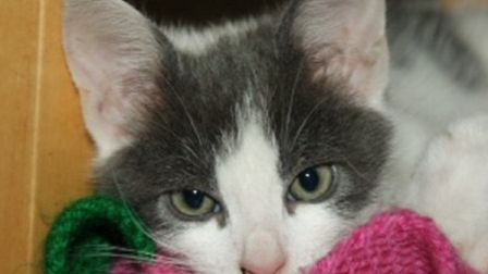 Donny the kitten has survived the ordeal of being dumped inside a sealed shoebox. Picture from RSPCA