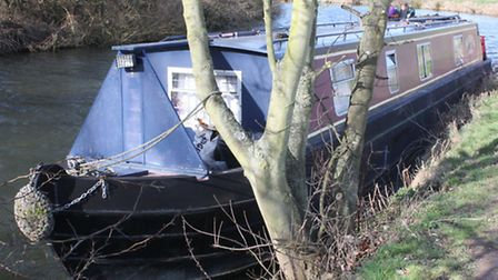 Moored to a tree