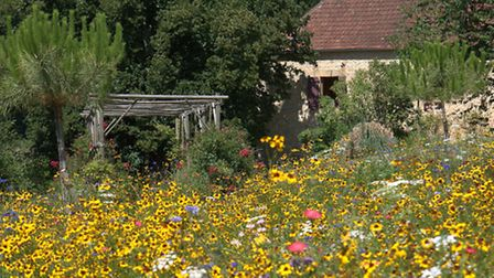 Rob's meadow in full bloom