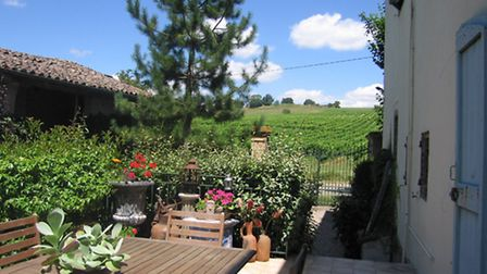 The view of vineyards
