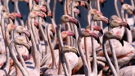 The pink flamingos of the Camargue © V. Formica / CDT Bouches-du-Rhone