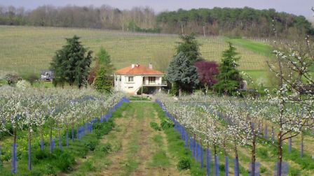 House surrounded by vineyards, 270,300 euros