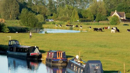 Boats and cows at Lechlade