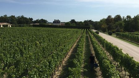 Chateau de Thieuley vineyard in the Bordeaux wine producing region