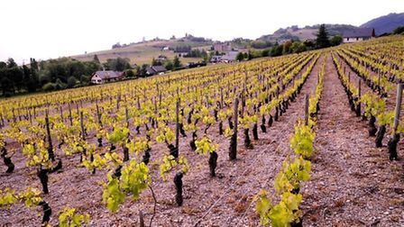 Jean-Charles Girard-Madoux domaine in the Savoie