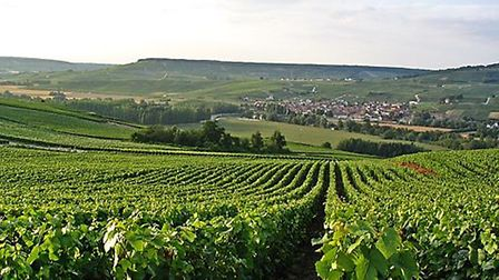 Tarlant champagne producer in Champagne