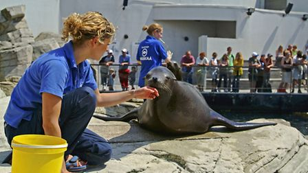 A carer feeds a seal at Nausicaá National Sea Centre in Boulogne-sur-Mer