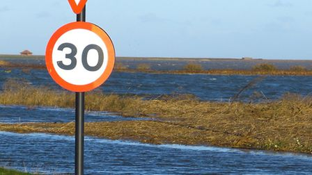 A seal pup swims up the flooded A149 at Cley. Picture: Marcus Nash