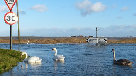 Swans swim on the flooded A149 at Cley. Picture: Marcus Nash