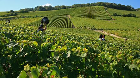Mesnil sur Oger vineyards in Alsace-Champagne-Ardenne-Lorraine © Atout France / Olivier Roux