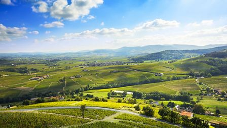 Beaujolais vineyards in Saône et Loire in southern Burgundy ©Thinkstock/Fontaine Gael