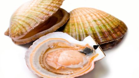 Light and fresh, scallops make for a perfect summertime supper © Dreamstime