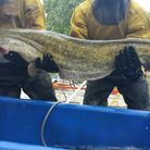 Monster catfish caught on canal